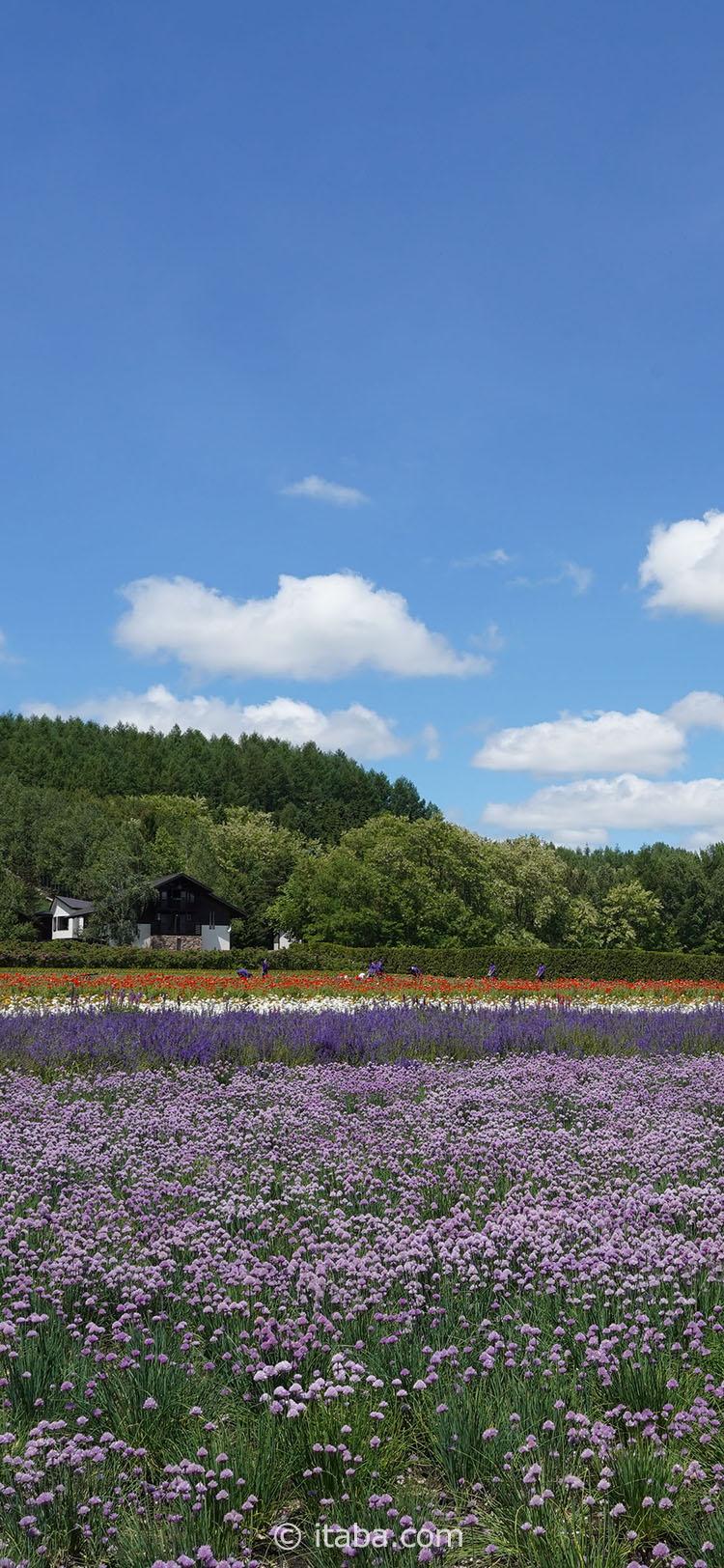 壁紙 日本と韓国 そして風景写真