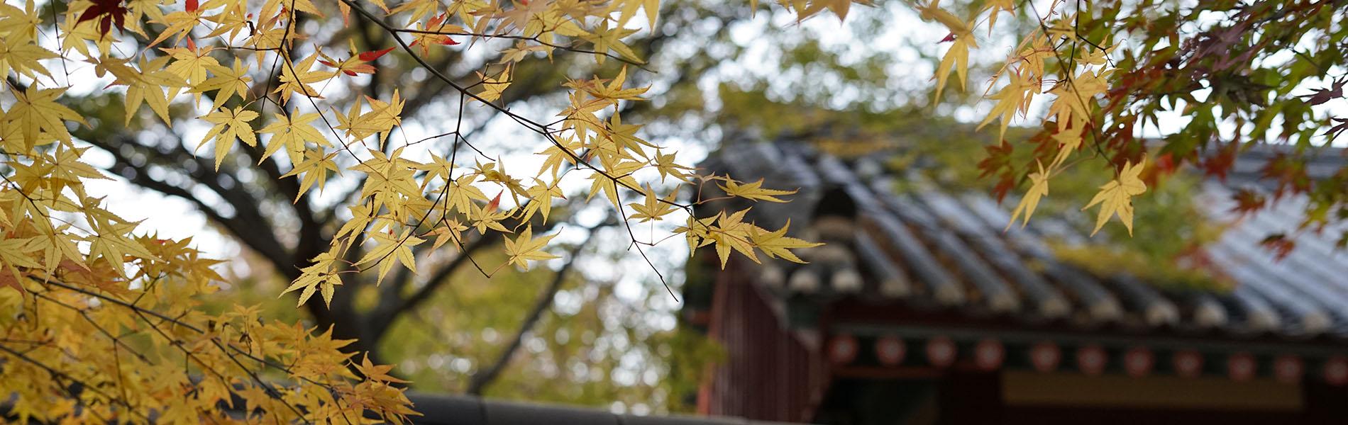 韓国 禅雲寺